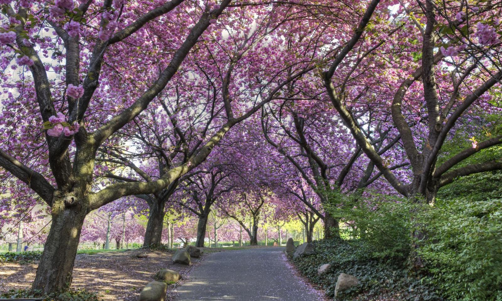 7 Day New York Itinerary Explore Nyc In 7 Days On A