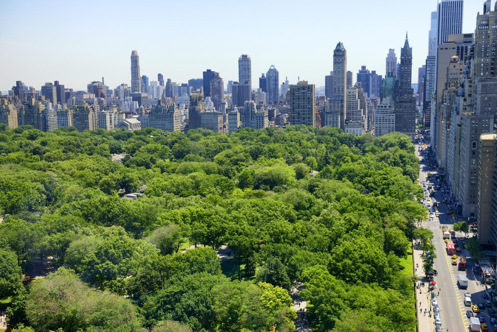 Central Park- 7 Day New York Itinerary