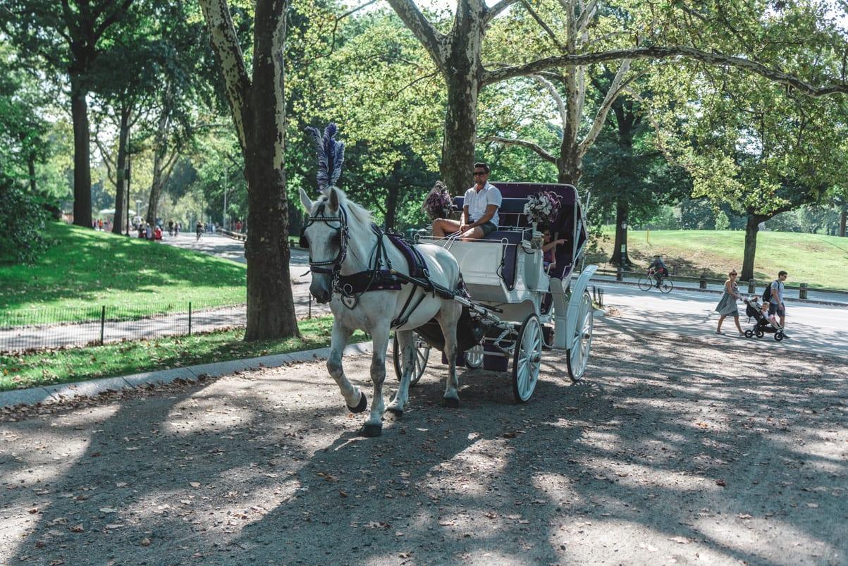Horse & Carriage Ride Through Central Park