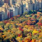 Things to do in New York in the Fall