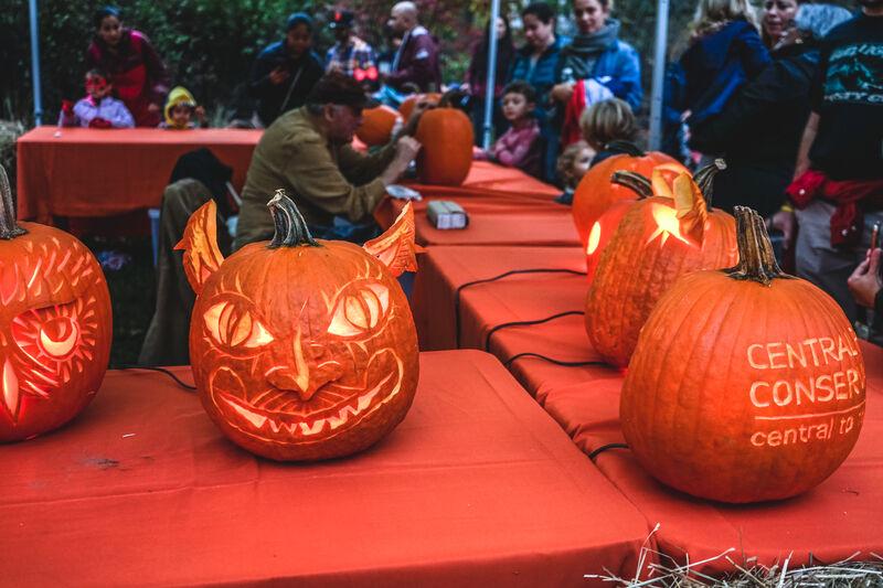 Pumpkin Flotilla Central Park